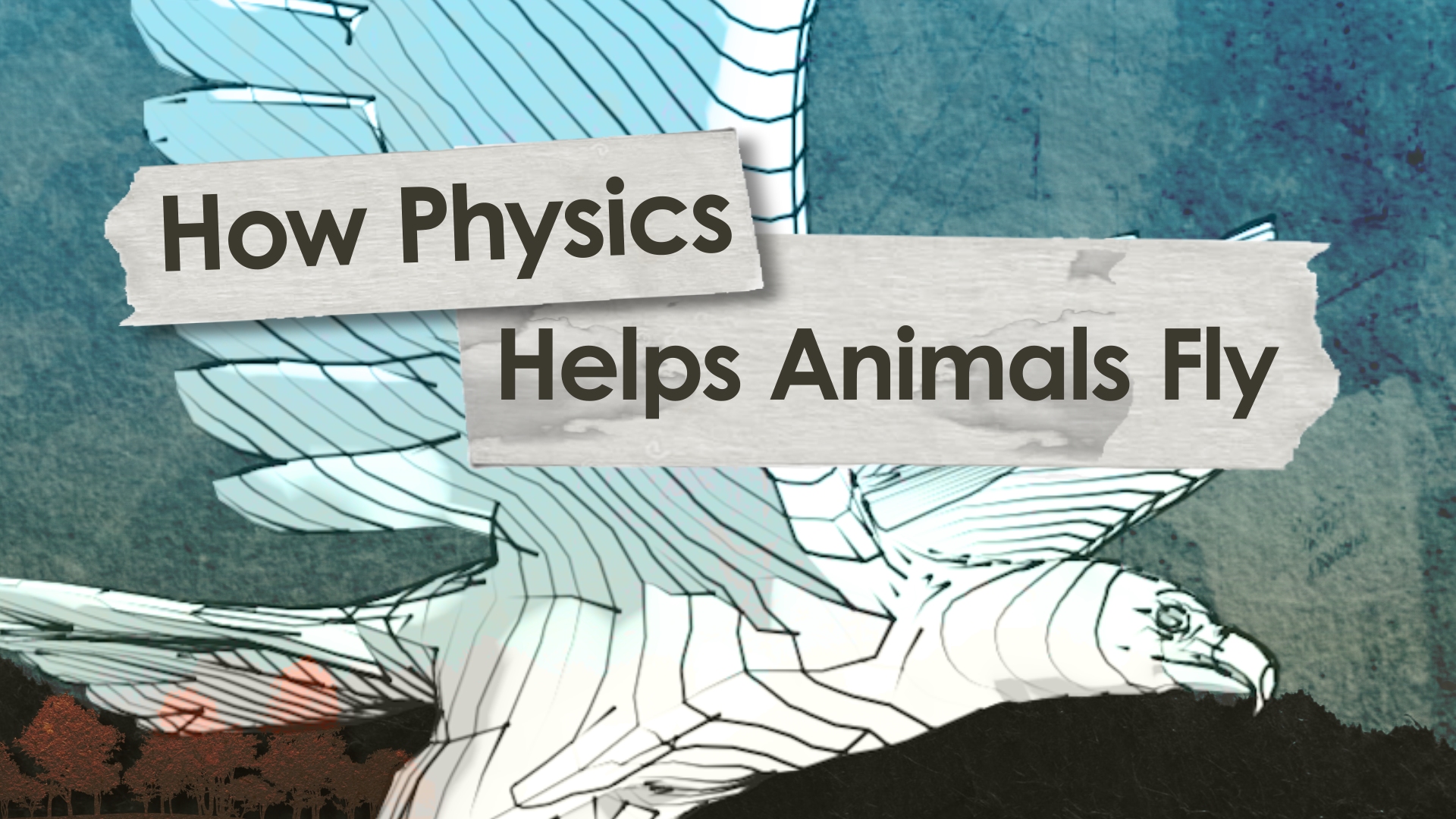 HowStuffWorks Illustrated: How Physics Helps Animals Fly ...