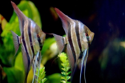 How To Set Up An Aquarium Howstuffworks