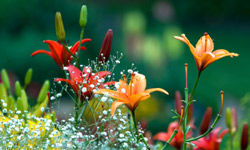 Top 10 Spring Plants Howstuffworks