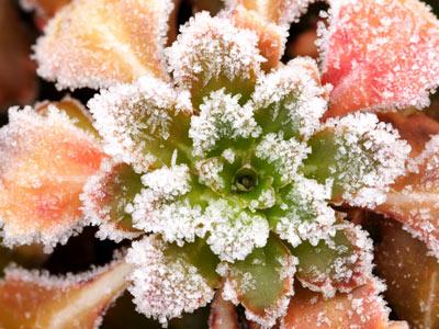 Top 10 Winter Plants Howstuffworks