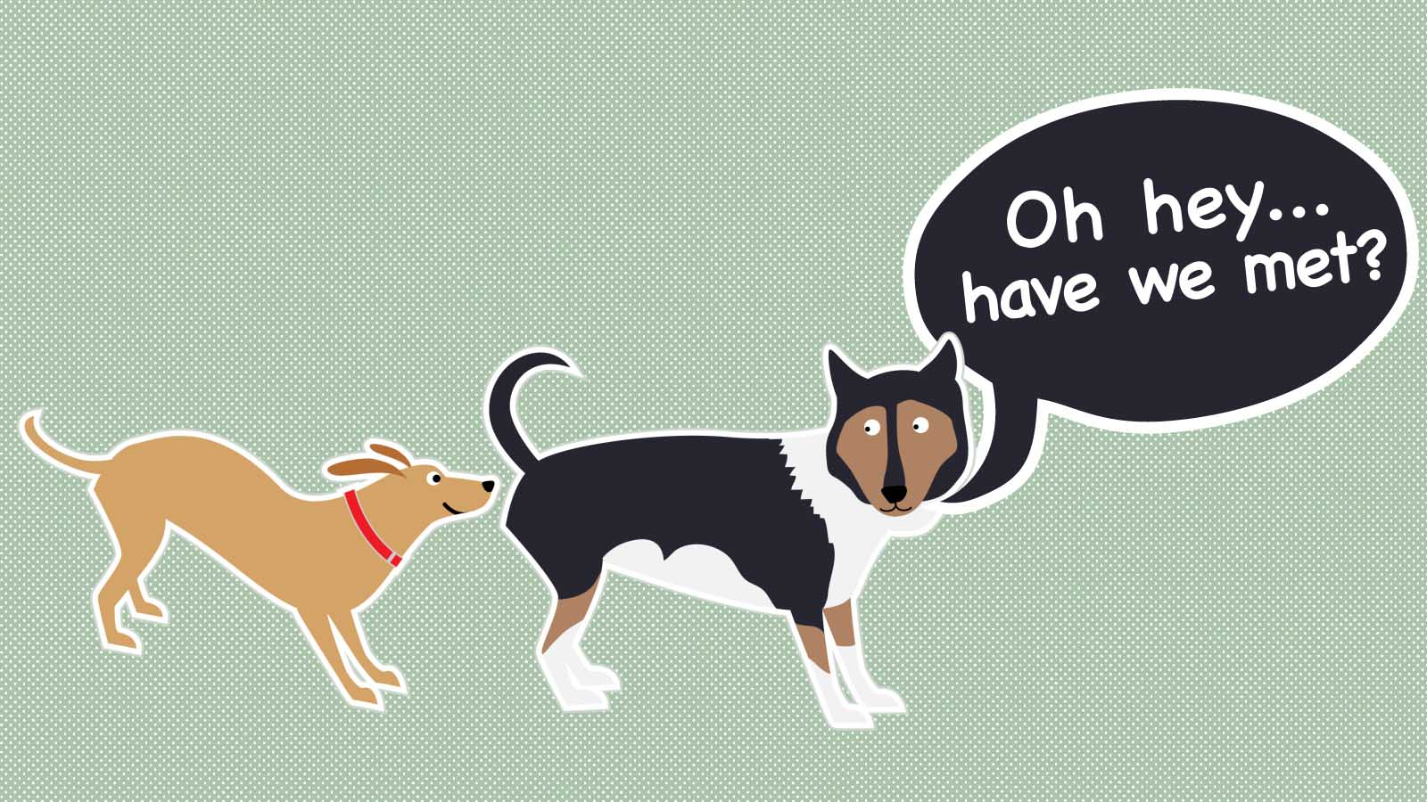 Why Do Dogs Sniff Each Other's Butts?