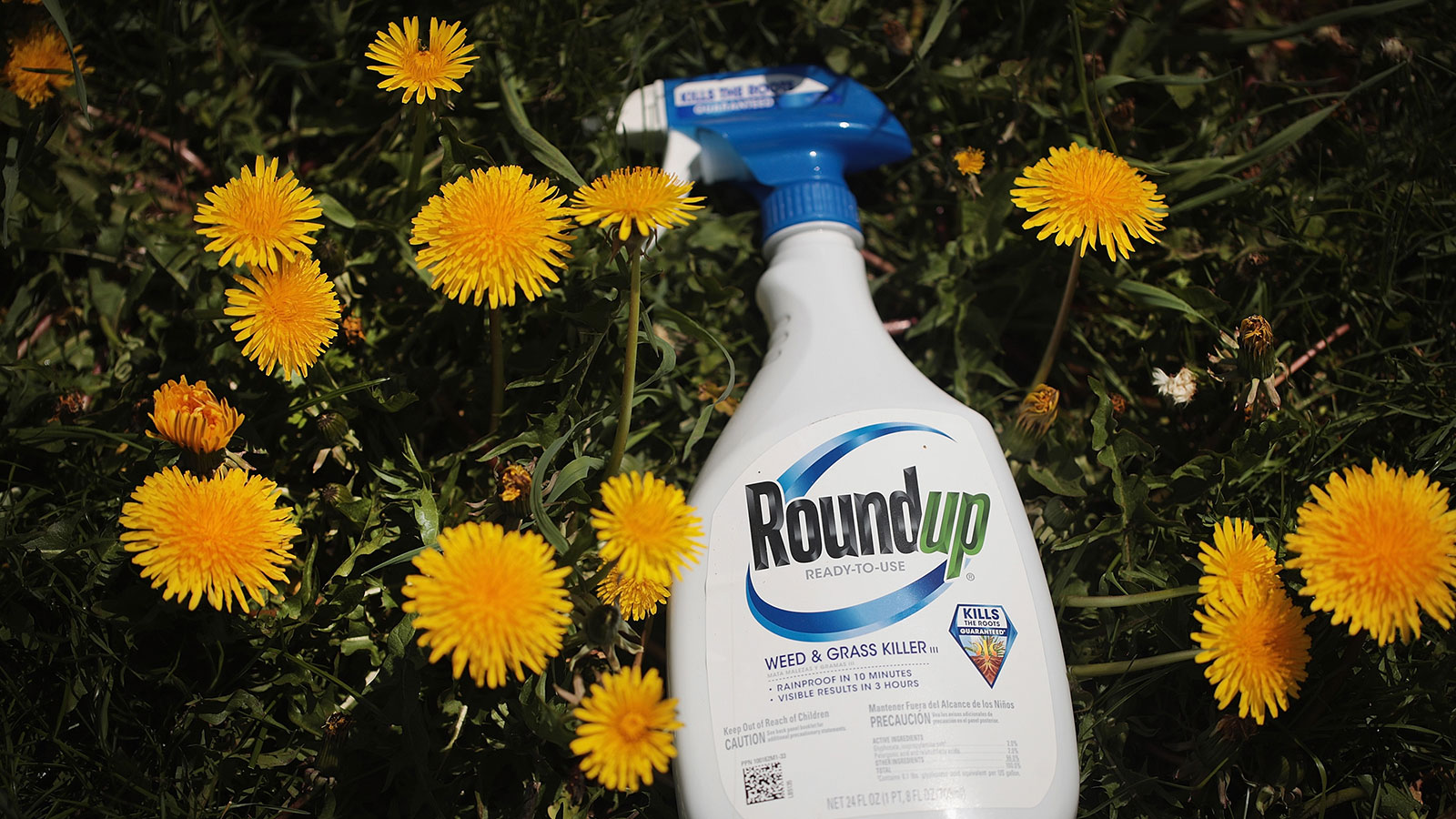 How Does the Herbicide Glyphosate (Roundup) Work?