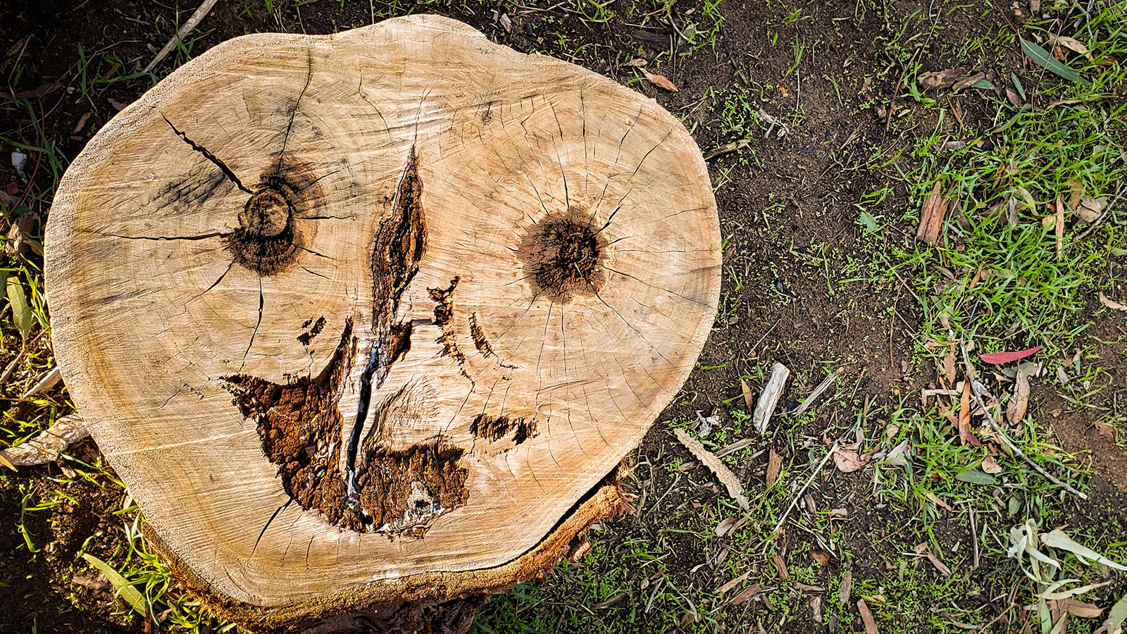 Pareidolia: Why We See Faces in Almost Everything