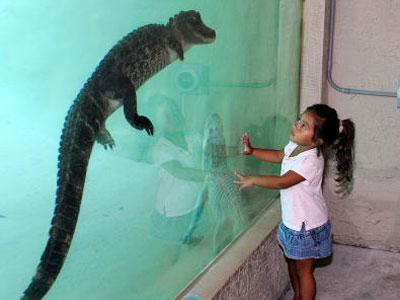 Alligator stuff
