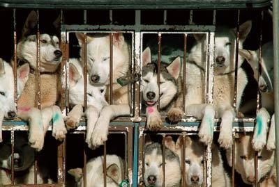 Animal Welfare Organizations | HowStuffWorks