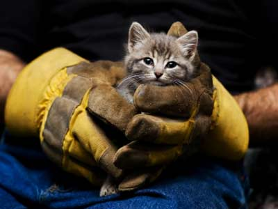 Animal Rescue Organizations   HowStuffWorks