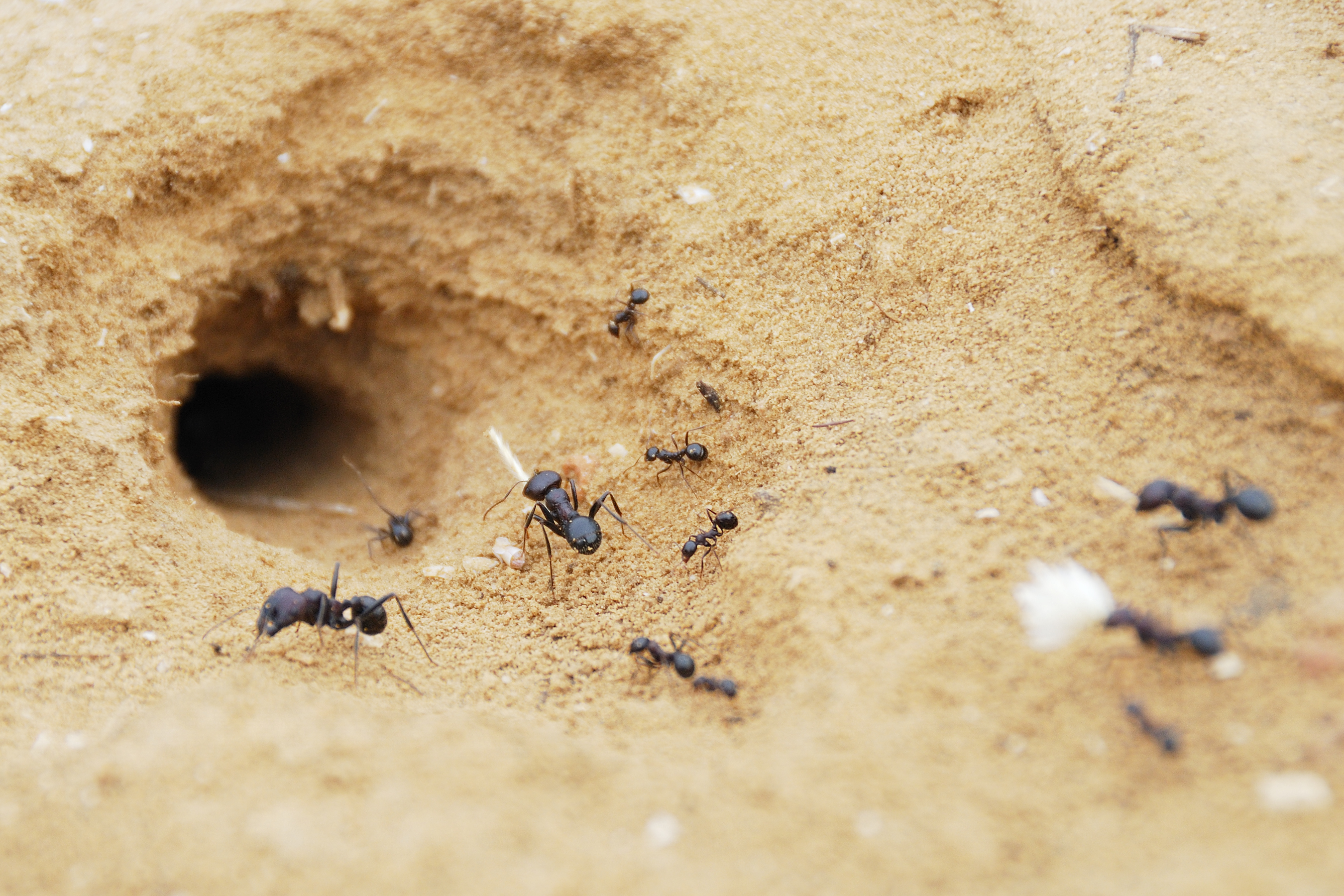 Common Locations For Ant Nests Howstuffworks