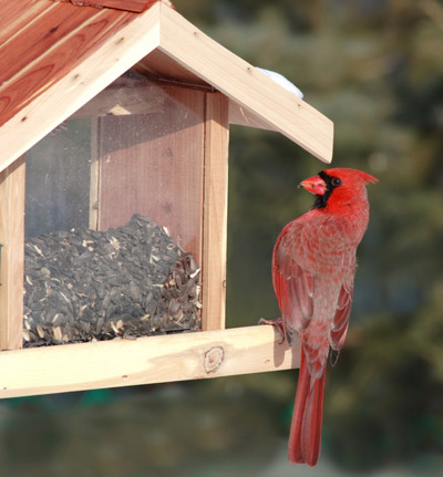 The Audubon Society encourages people to turn their yards into bird habitats