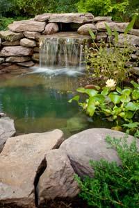 How to Create a Backyard Wildlife Habitat | HowStuffWorks