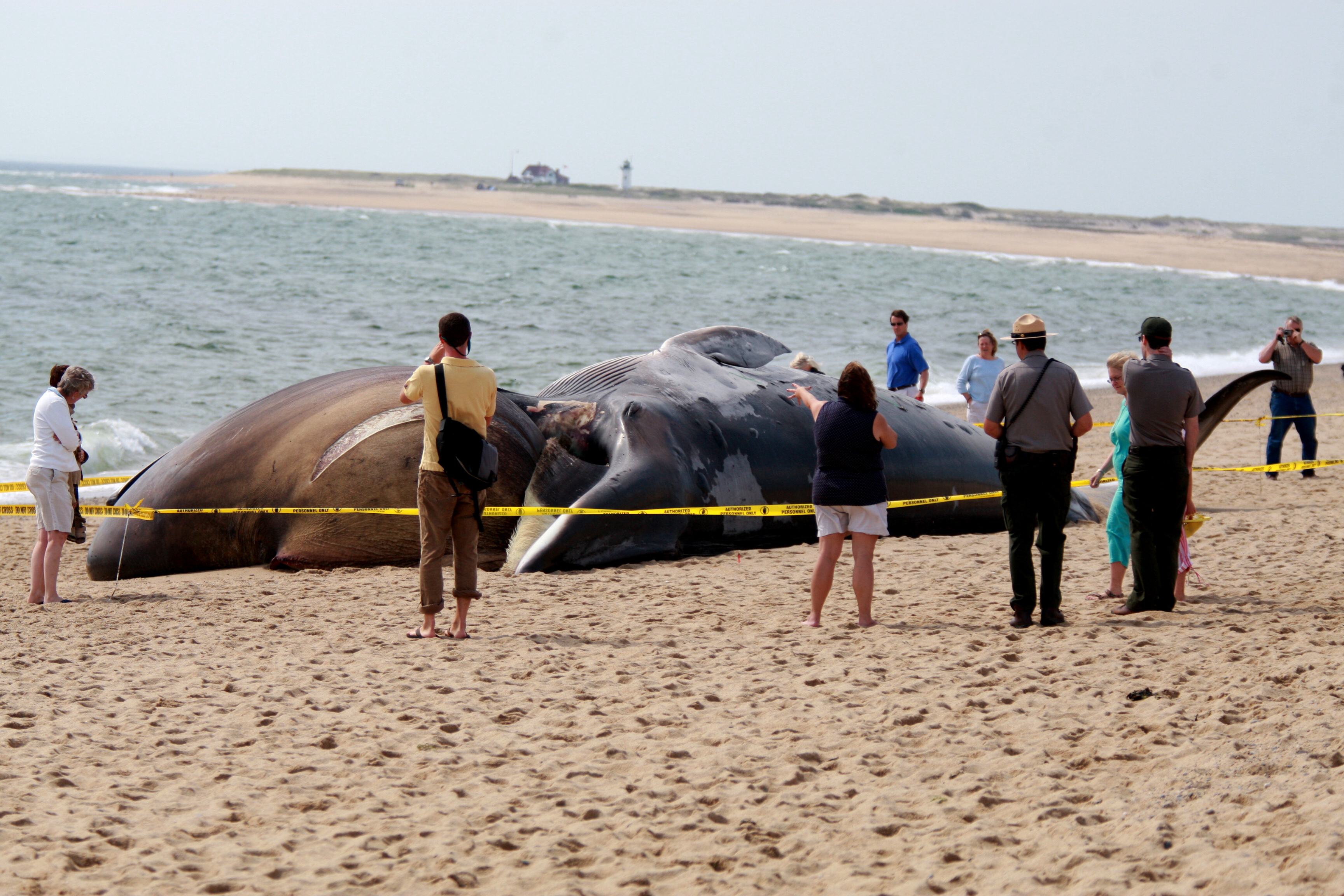 What Makes Beached Whales Explode Howstuffworks