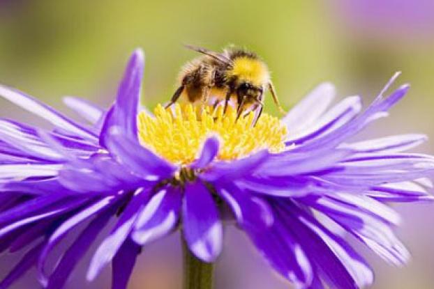 Bee Anatomy Howstuffworks