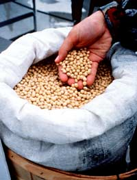 Soybeans can be made into biodiesel.