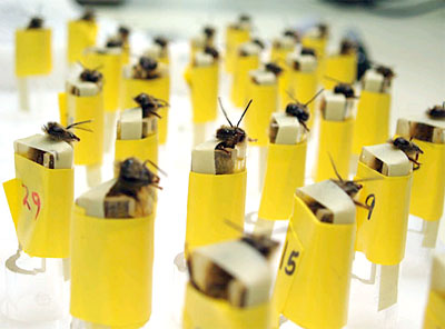 How can you train honeybees to sniff for bombs? | HowStuffWorks