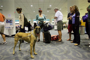 Sniffing Around an Airport Near You | HowStuffWorks