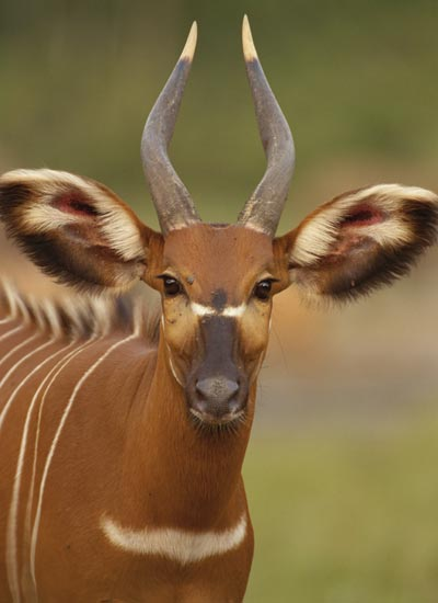 bongo ig - Collection of funny african wildlife photos