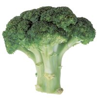 stalk of broccoli