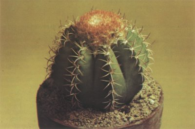 Light Requirements Of Cactus Plants
