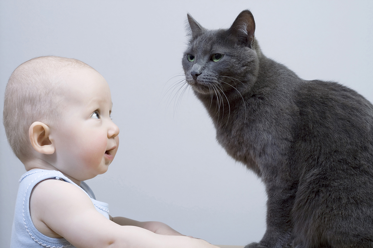 Do Cats Really Steal Babies Breath Howstuffworks