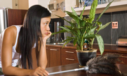 Fascinating Facts About 5 Common Household Allergens