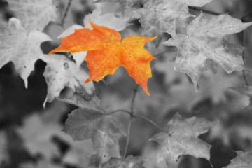 Image result for monochromatic black and white with splash of color