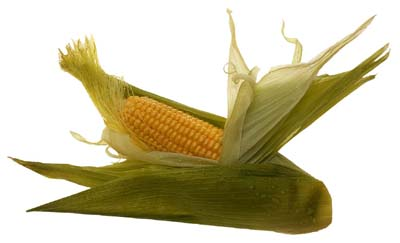 ear of corn with husk