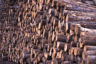 Causes of Deforestation | HowStuffWorks