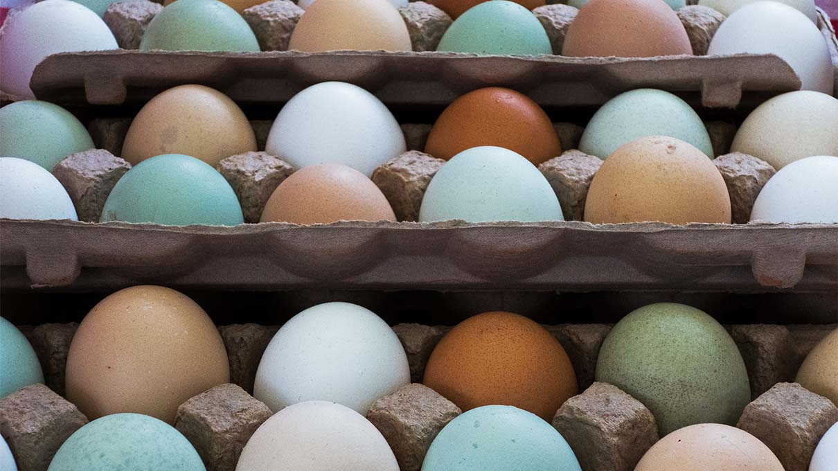 White Brown Green Chicken Eggs What S The Difference Howstuffworks