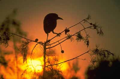 Everglades National Park is a bird-lover's paradise, with over 300 species.