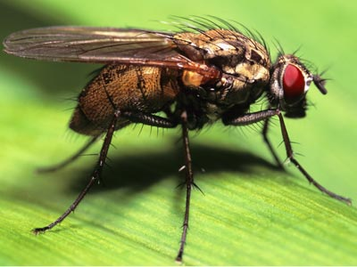 How do flies breathe? | HowStuffWorks