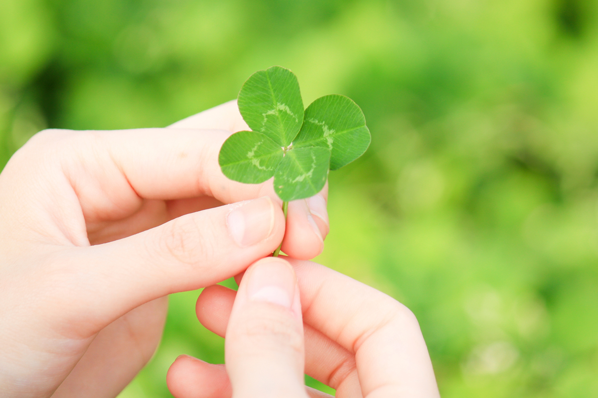 What S The Best Way To Find A Four Leaf Clover Howstuffworks