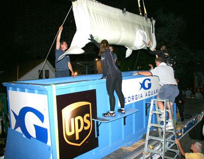 [b] Pracownicy akwarium opuszczają bieługę do pojemnika transportowego.
