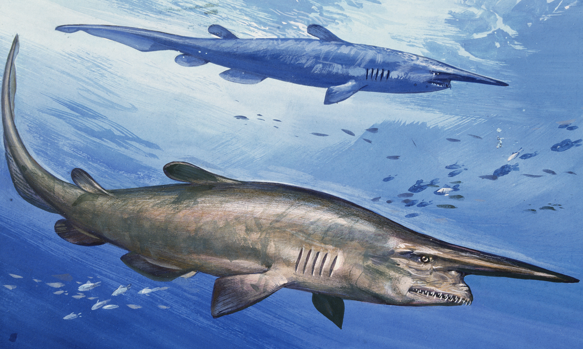 blast from the past: living fossils - blast from the past -- living fossils  | howstuffworks