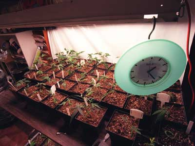 Keeping Grow House Operations Under Wraps | HowStuffWorks