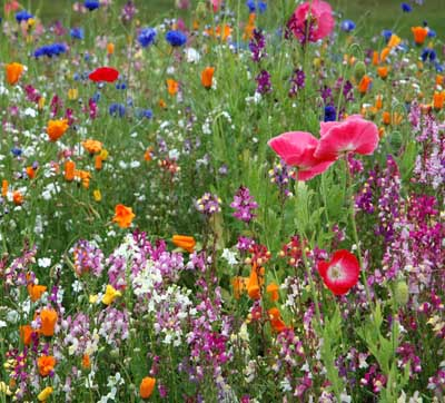 Gardening Tips from Inkd Home Improvement