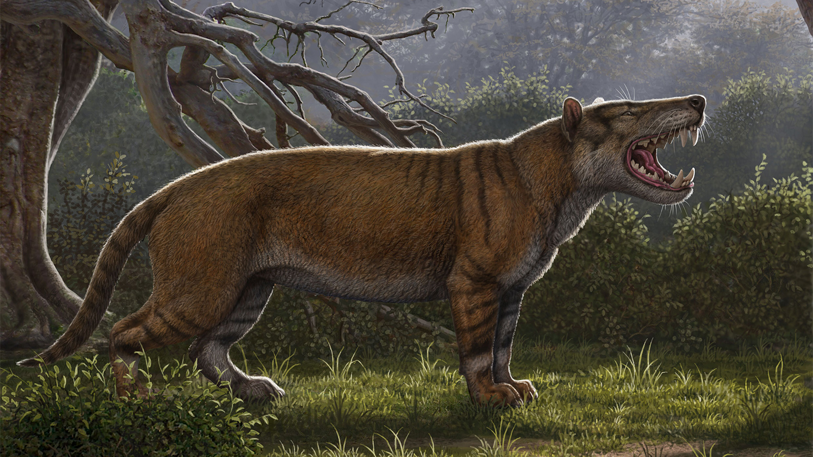 Prehistoric Predator Rediscovered in Museum Drawer