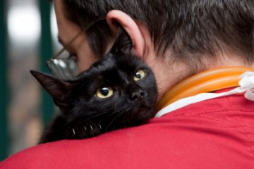 Home Remedies for Cats | HowStuffWorks