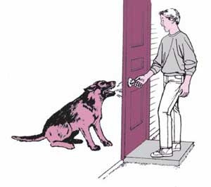 Dogs are good deterrants to burglars. Even a small, noisy dog can be effective.