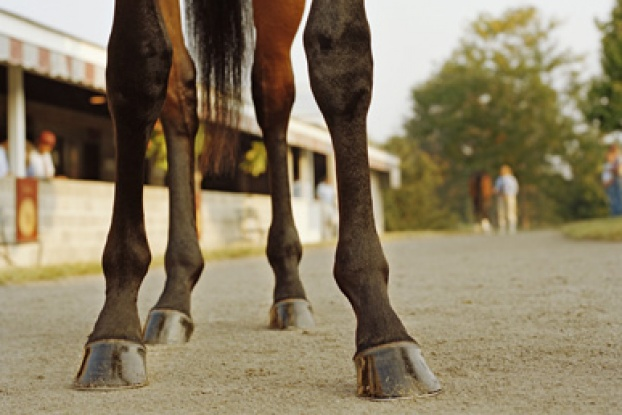 Do horses with broken legs have to be shot? | HowStuffWorks