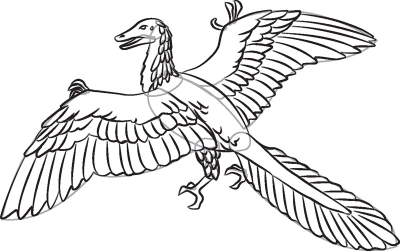 how to draw archaeopteryx in 7 steps