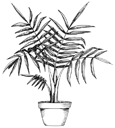 1 Pot And Stems How To Draw A Palm Howstuffworks