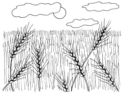 How to Draw Wheat Fields in 4 Steps | HowStuffWorks