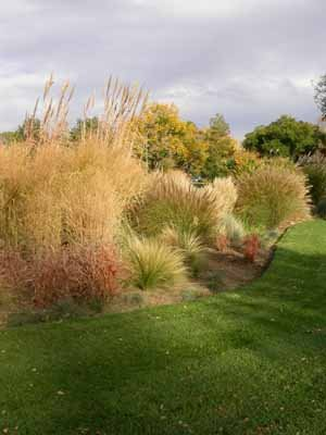 Ornamental grasses, shrubs, and border plants can be mixed together effectively.