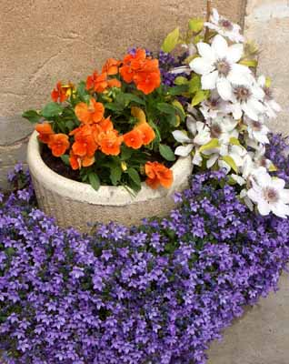 Container gardening allows for a variety of plants, placed exactly how you wish you display them.