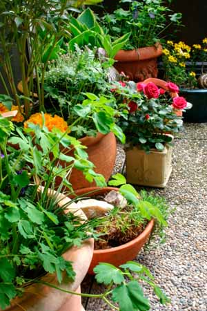 Group your pots of annuals together for more visual impact.
