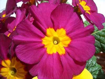 The bellflower, a popular rock garden plant, doesn't need acidic soil.