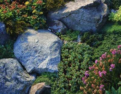This rock garden looks nice on a slope.