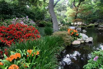 This water garden benefits from the fish that inhabit it.