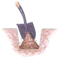 Dig a hole up to 18 inches deep to plant bare-root roses.