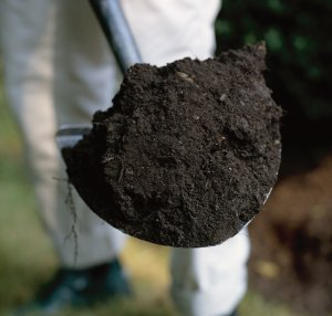 When growing an herb garden, check for soil texture by squeezing soil into your hand.
