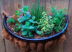 Grow an herb garden as a container garden if you don't have room for outdoor planting.